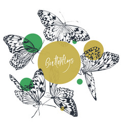 Butterfly classic collection vector