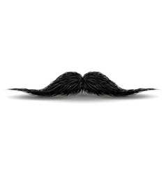 charm mustaches for barbershop or mustache vector image
