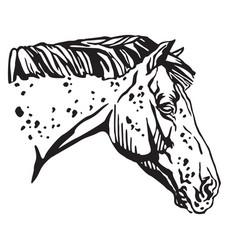 Decorative portrait of appaloosa horse vector