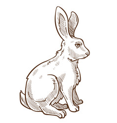 Hare rabbit or bunny isolated sketch drawing vector