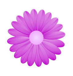 purple flower on white background vector image