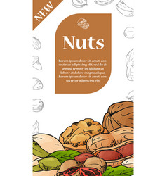 Set of cards with nuts and seeds pistachios vector