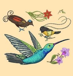 small hummingbird bird of paradise daffodil and vector image