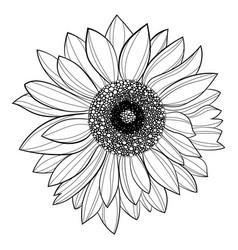 sunflower flower black and white of vector image