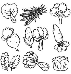 Doodle of vegetable hand draw vector