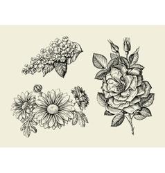 Flower Hand drawn sketch dogrose rosehip wild vector image vector image