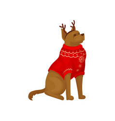Dog wearing red holiday sweater and reindeer horn vector