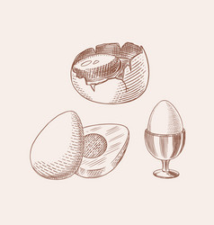 Eggs and and yolk shell and farm product vector