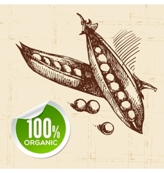 Hand drawn sketch vegetable peas Eco food vector image