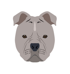 Isolated pitbull avatar vector
