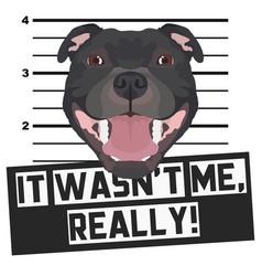 Mugshot mug shot staffordshire bull terrier vector