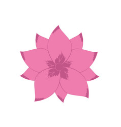 rustic flower with natural petals vector image
