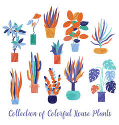 set collection of bright funky house plants vector image