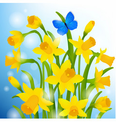 spring postcard with narcissus flowers vector image