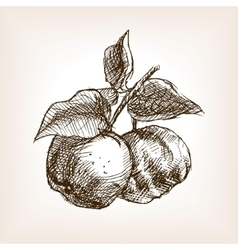 Quince hand drawn sketch style vector image
