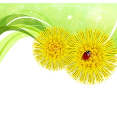 Spring floral background with coltsfoot vector image vector image