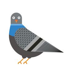 City pigeon bird geometric icon in flat vector