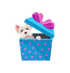 Maltese dog peeking out of blue gift box with pink vector