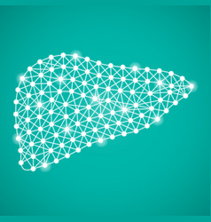 human liver isolated on a green background vector image vector image