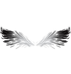 abstract black and white wings vector image