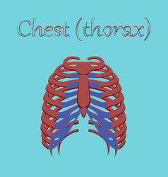 Human organ icon in flat style chest thorax vector