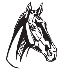 Decorative portrait of trakehner horse vector
