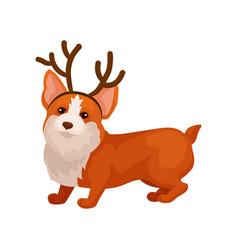 funny corgi dog with reindeer horn hoop adorable vector image
