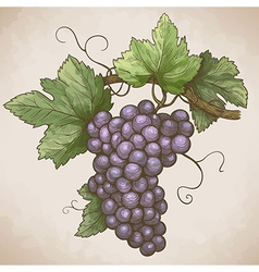 grapes on the branch retro style vector image