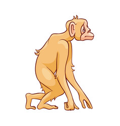 monkey standing and looking vector image