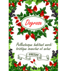 poster of fresh dogrose berries and fruits vector image vector image