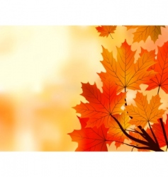 maple tree leaves vector image vector image