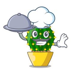 Chef with food mammillaria compressa cactus vector
