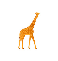 giraffe in flat design african animal vector image