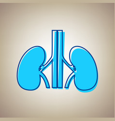 human anatomy kidneys sign sky blue icon vector image
