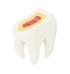 section of tooth icon isometric style vector image