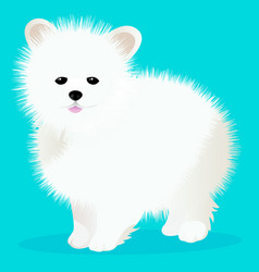spitz dog white vector image