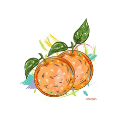 oranges with colorful splashes vector image