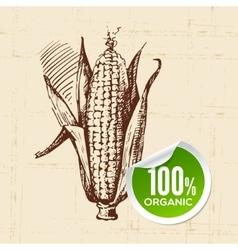 Hand drawn sketch vegetable corn Eco food vector image