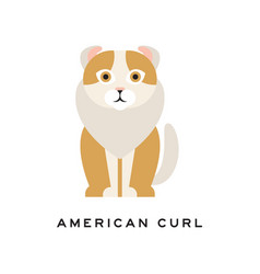 American curl cat purebred pet with curled ears vector