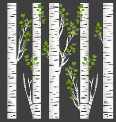 Birch trunks in night vector