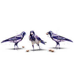 Crows watercolor isolated birds on white vector