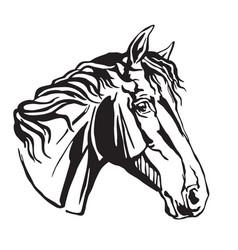 Decorative portrait of trakehner horse-4 vector