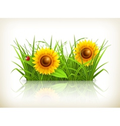 Sunflowers in grass vector image