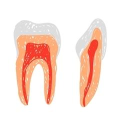 Teeth doodle vector image