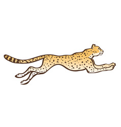 Cheetah running sketch vector