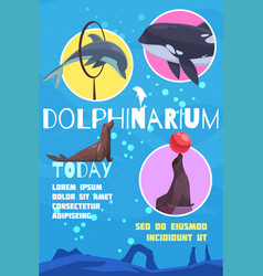 Flat dolphinarium announcement poster vector