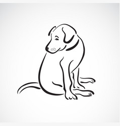 Sitting doglabrador retriever on white vector