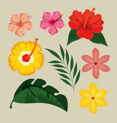 summer tropical graphic elements vector image