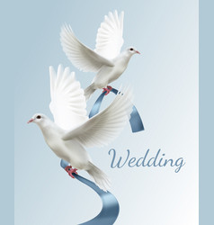 two white doves with blue vector image