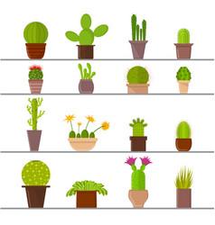 cartoon cactus plant in pots vector image